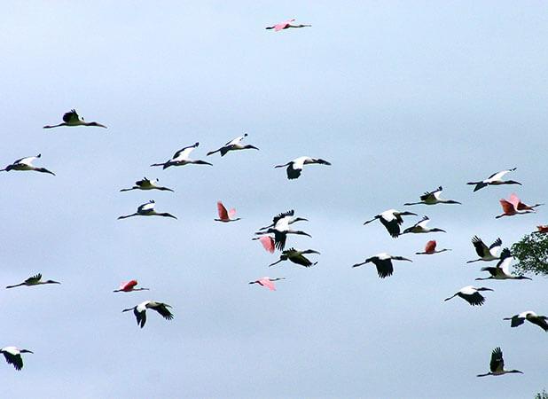 Grandes grupos de diversos tipos de aves