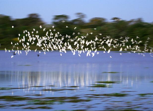 Grande visualização de aves aquáticas