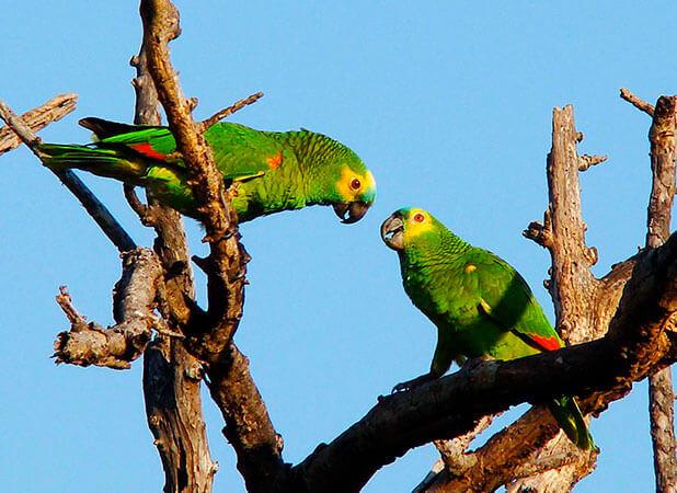 Aves encantadoras