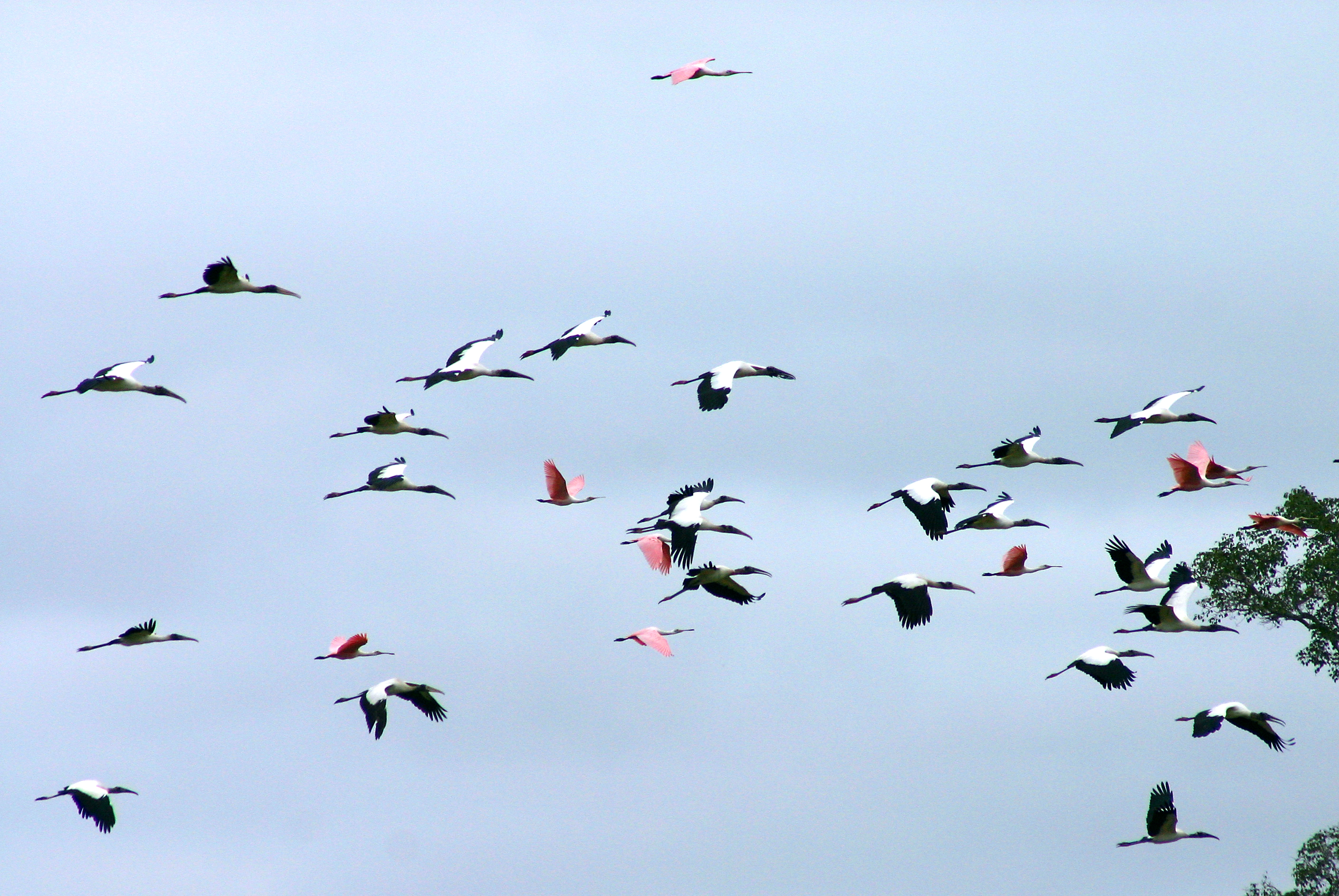Large groups of different kinds of birds